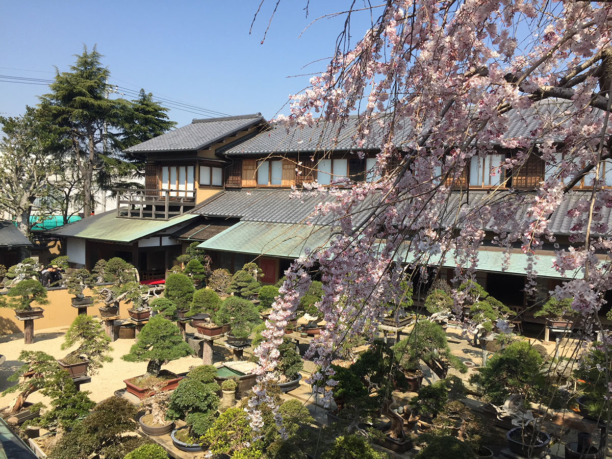 Museo de BONSAI Shunka-En _3