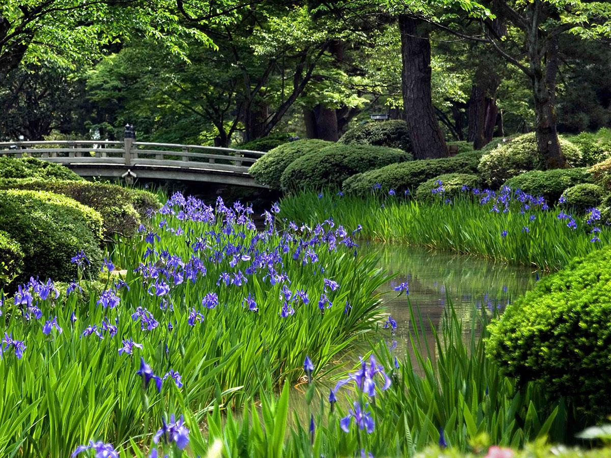 Kenroku-en Garden_3