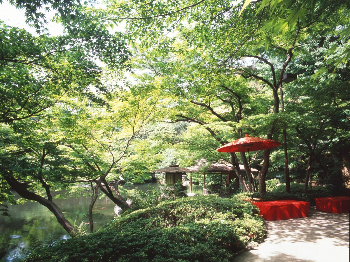 八芳園 槐樹