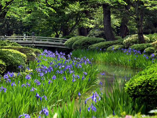 Giardini Kenrokuen_3
